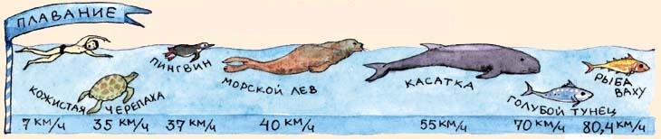 http://jtdigest.narod.ru/dig1_02/kenguru/pic2.jpg
