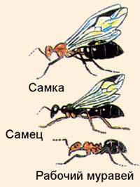 Мир муравьев: города, дороги, связь и телепортация муравьиной матки.